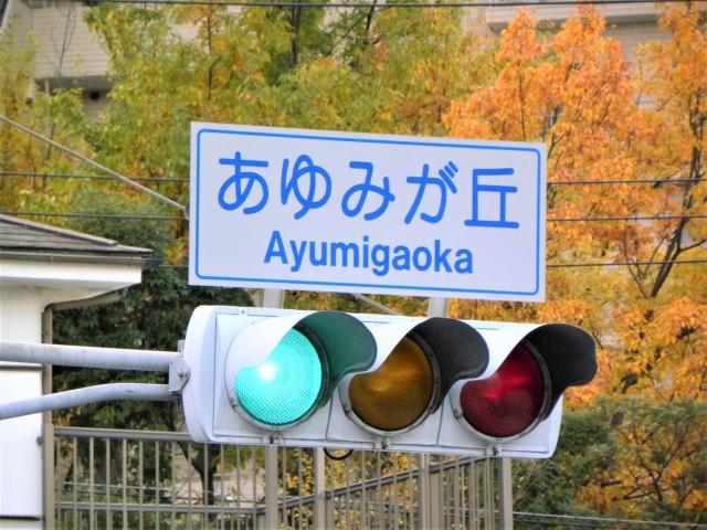 青信号の横断歩道